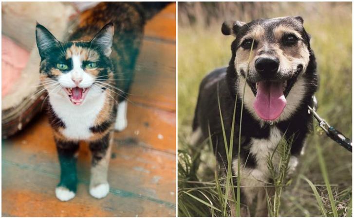 Фото №1 - Котопёс недели: кошка Варежка и собака Майя ждут своих людей