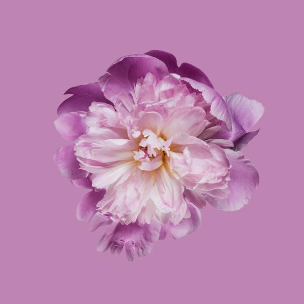 Фото №1 - Тест: Выбери цветок, и мы скажем, какая ты на самом деле