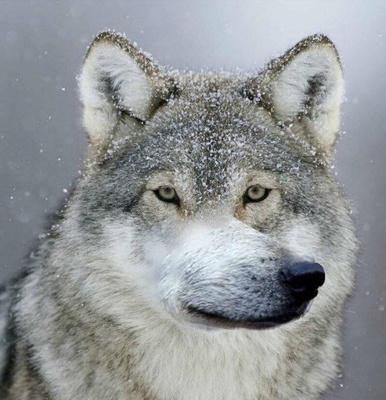 Фото №3 - Тест: отличи настоящую «пацанскую» цитату от цитаты из мема про волков