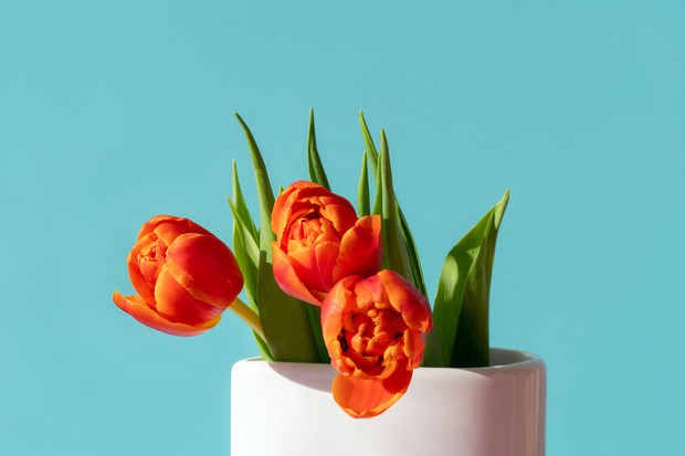 Фото №5 - Узнай, какой ты цветочек по дате рождения