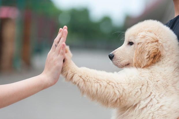 Фото №2 - Как назвать собаку: 20 эффектных кличек