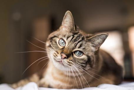 Фото №2 - Тест: Выбери котика, а мы скажем, как ты проведешь выходные