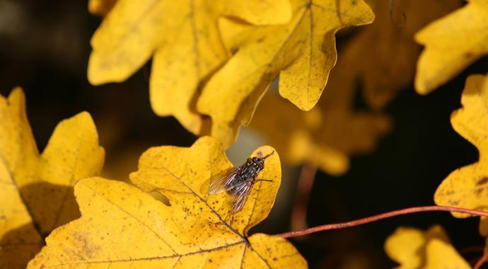 Приметы и древние традиции сентября: отпраздновать Новый год и похоронить муху