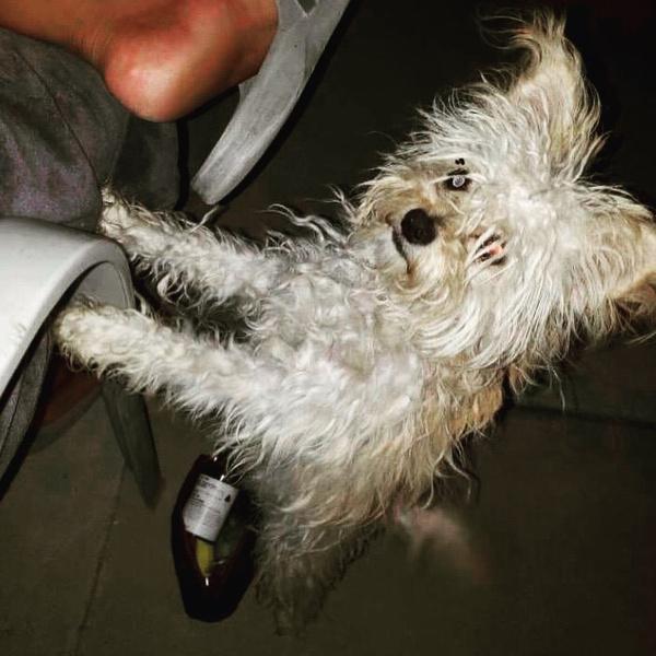 Фото №1 - Нежность зашкаливает: Орландо Блум в обнимку с щенком на прогулке