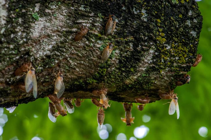 Фото №2 - Какое насекомое живет дольше всех?