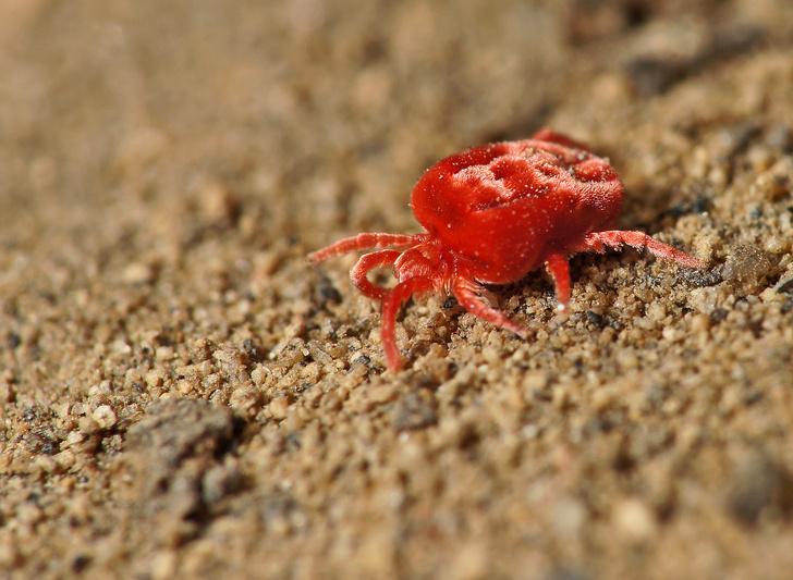 Фото №3 - Драмы, инженерные изобретения, смертельные опасности: как проходит весна в мире насекомых и пауков