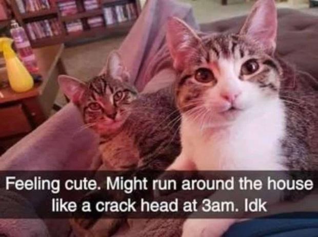 Фото №3 - Лучшие мемы про котов со всего Интернета