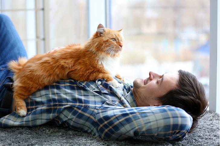 Фото №1 - 10 признаков, что твой кот счастлив