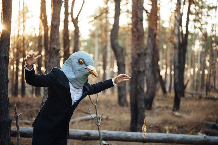 Фото №1 - Почему никто не видел птенцов голубей и как они выглядят