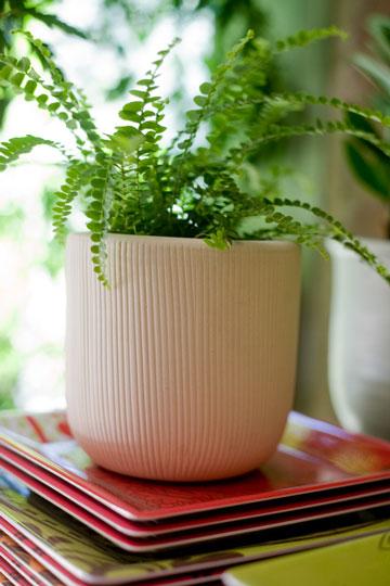 Фото №5 - Модное растение в доме: папоротник