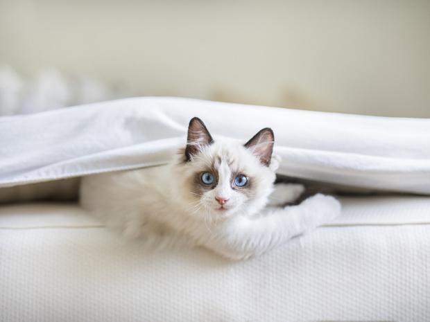 Фото №4 - Отдать нельзя оставить: что делать, если у вас аллергия на домашнее животное