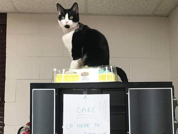 Фото №1 - Ни капли раскаяния: 30 страшных кошачьих преступлений— фото