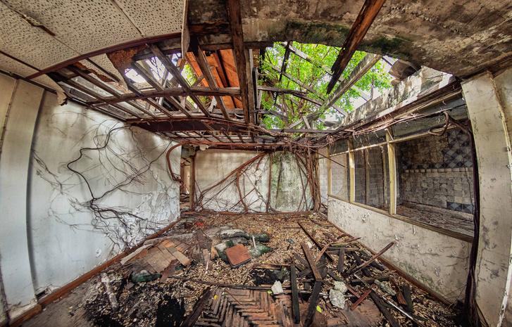 Фото №2 - Зри в корень: занимательные факты о «подземной» жизни растений