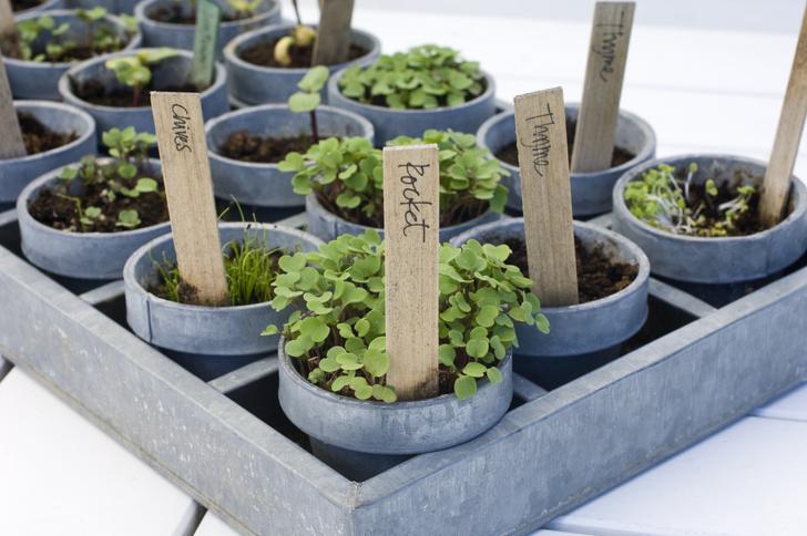 Фото №4 - Календарь садовода: что и когда сажать дома и на даче