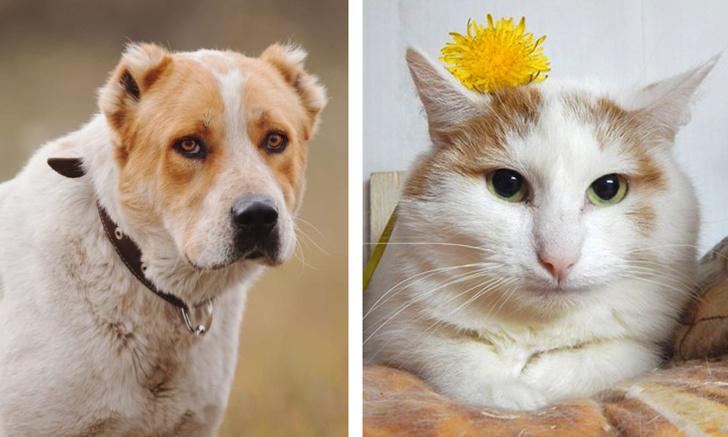 Фото №1 - Котопёс недели: пёс Артур и кошка Таша
