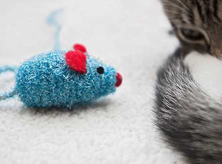 Кот смотрит на игрушечную мышь