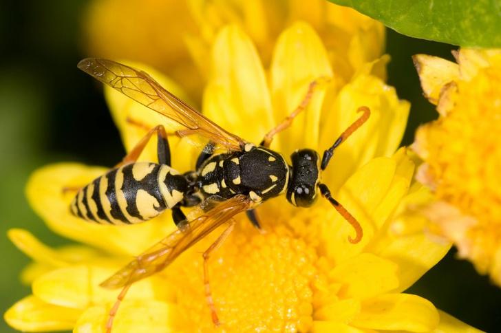 как защитить ребенка от насекомых летом