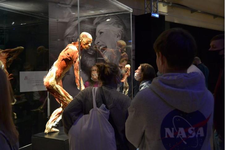 Фото №2 - «Такой анатомии не надо бояться, ее надо знать»: посетители высоко оценили выставку Body Worlds