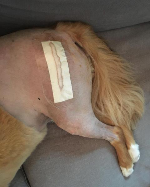 Фото №2 - Милота дня: посмотри, какой сюрприз устроил Крис Эванс своей собаке 🥺