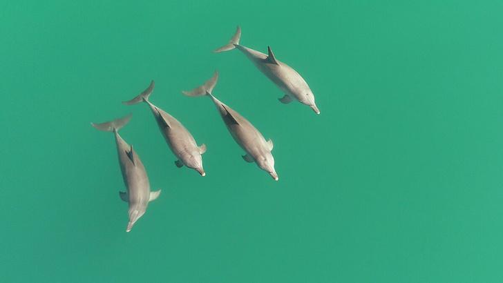 Фото №1 - Дельфины имеют свое представление о командной работе