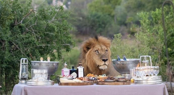 Пикник со львом