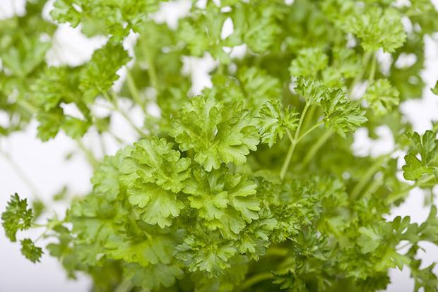 Фото №2 - Зеленые витамины: как безопасно выбрать и правильно есть