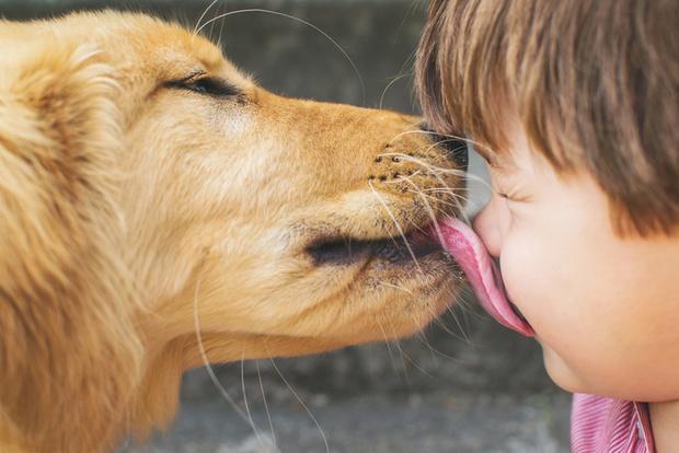 Фото №1 - Чем нас могут заразить животные?
