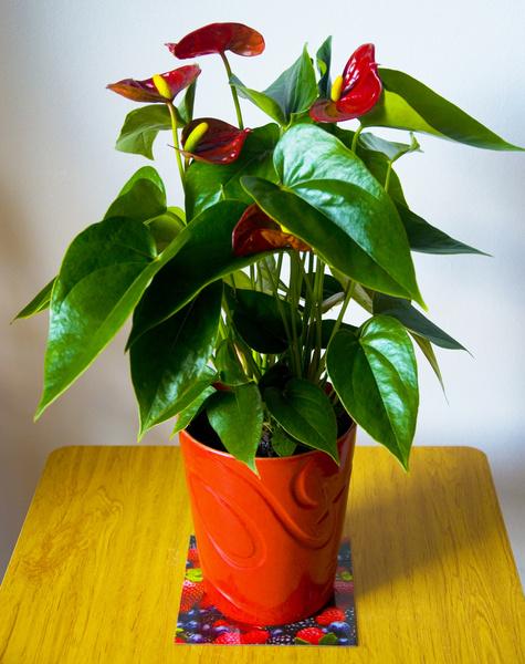 Фото №7 - Кактус цветет к деньгам: как гадать на комнатных растениях