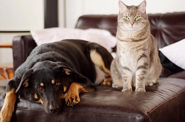 Фото №1 - 9 вещей, которым учат нас домашние животные