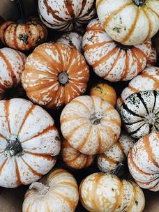 Фото №8 - Тест: Выбери тыкву, и мы опишем твою осень тремя эмодзи