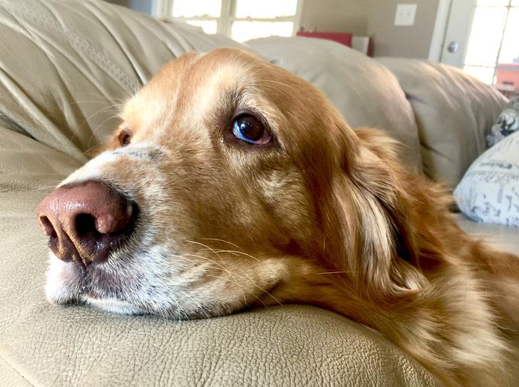 Фото №2 - 7 признаков, что у твоей собаки серьезный стресс, и что можно с этим сделать