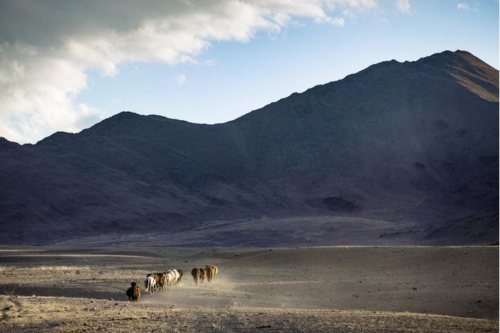 Фото №3 - Лошадь, которой нет: как возрождали исчезающих лошадей Пржевальского. Проект РГО