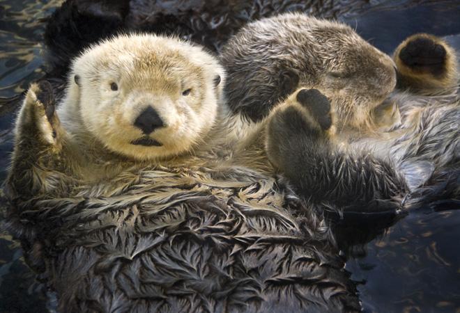 Фото №6 - 28 фактов о животных, которые поднимут настроение