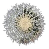 Фото №1 - Тест: Выбери кактус, и мы скажем, насколько ты колючая 🌵