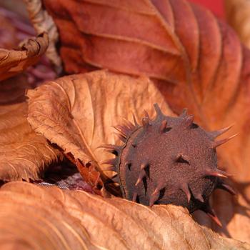 Фото №14 - Топ-10: осень в Европе для гурманов