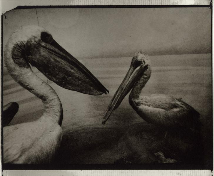 Фото №4 - Выставка фотографа Сары Мун в МАММ
