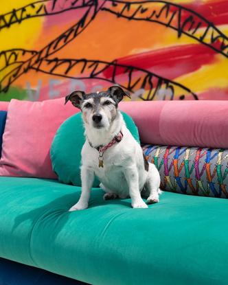 Фото №5 - Фэшн-дизайнеры и их собаки. Заряжено на лайки!