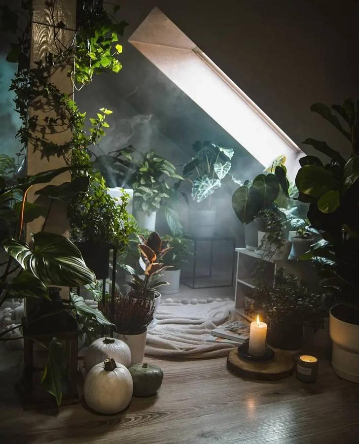 Фото №7 - Всё об увлажнении растений: советы эксперта