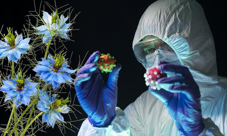 Фото №1 - Ученые обнаружили новое средство от коронавируса, и это цветок