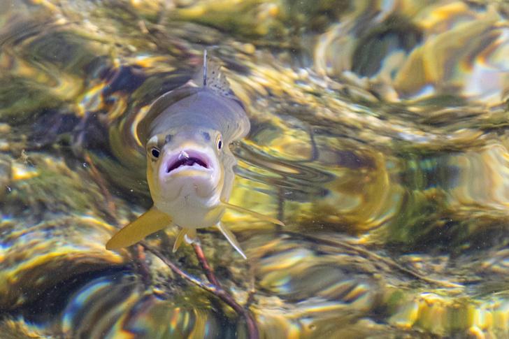 Фото №1 - Наркотики из сточных вод вызывают зависимость у рыб