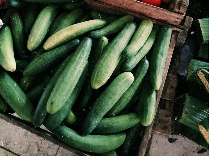Биолог Мальцева объяснила, почему необходимо есть горькие огурцы