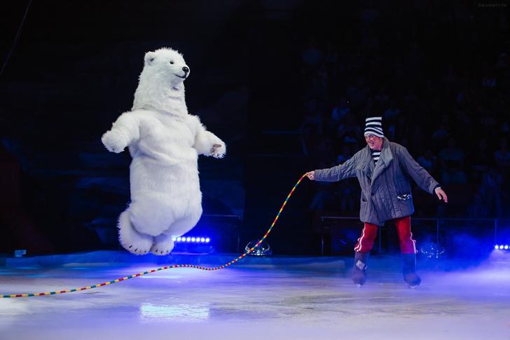 Фото №2 - В Воронеже выступят белые медведи
