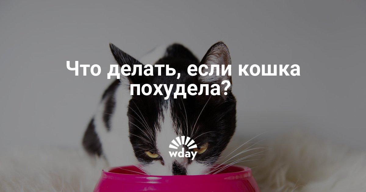Кошка Быстро Похудела Что Делать. 10 основных причин почему ваша кошка худеет