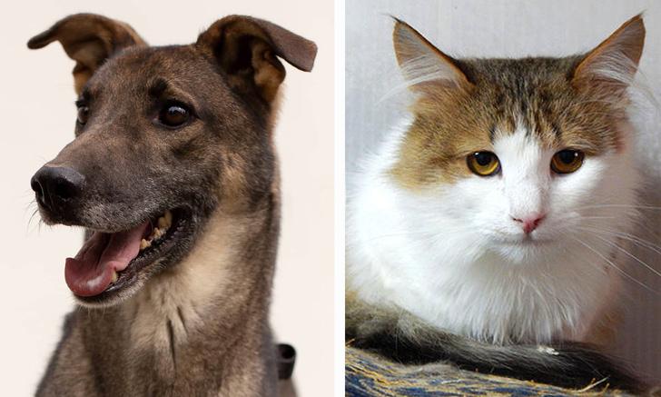Фото №1 - Котопёс недели: пёс Лори и кот Антуан