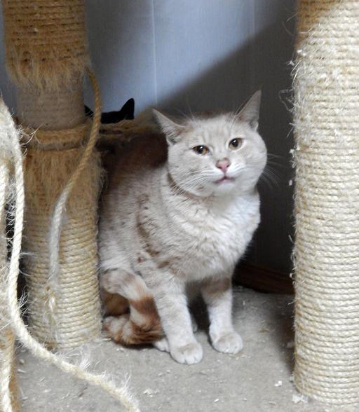 Фото №2 - Котопёс недели: кот Хумус и собака Лиса