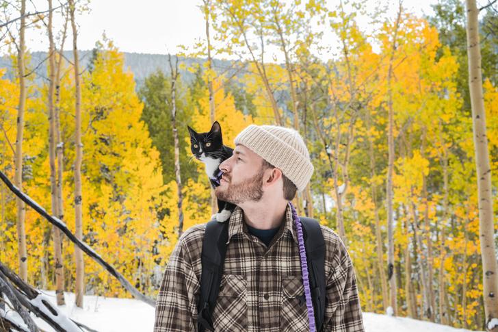 Фото №1 - Одиноким предоставляется… котик