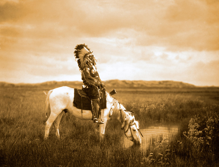 Фото №1 - Жизнь эмигрантов: 3 переселенца в Америку из мира животных