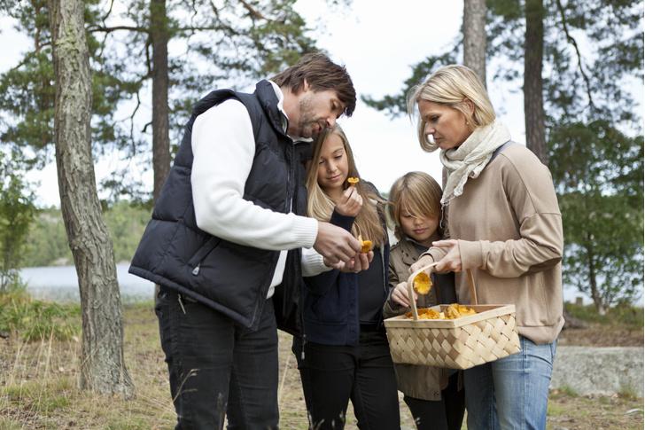 Грибной суп детям с какого возраста, грибы детям с какого возраста, какие грибы можно детям, грибы вред или польза