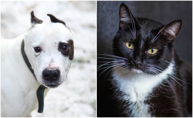 Фото №1 - Котопёс недели: пес Буч и кот Иннокентий