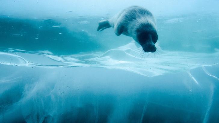 Фото №4 - «Планета Земля», «Байкал. Удивительные приключения Юмы» и еще 5 уникальных фильмов о дикой природе и животных
